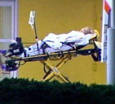 hospitaltiger2.jpg
