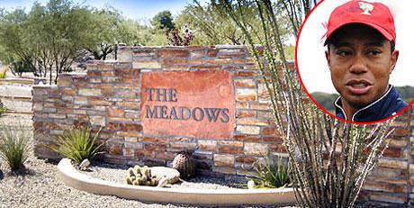 meadows1.jpg
