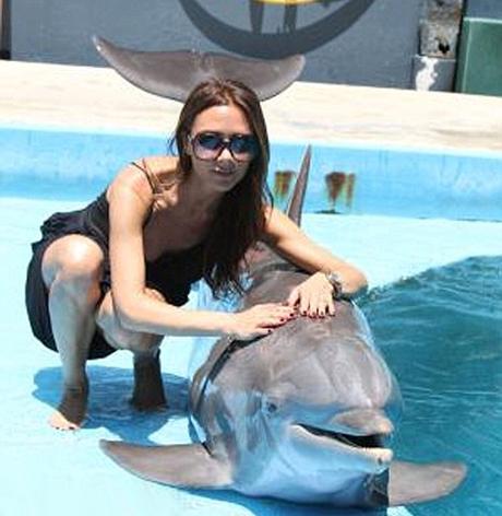 victoria-beckham-dolphin.jpg