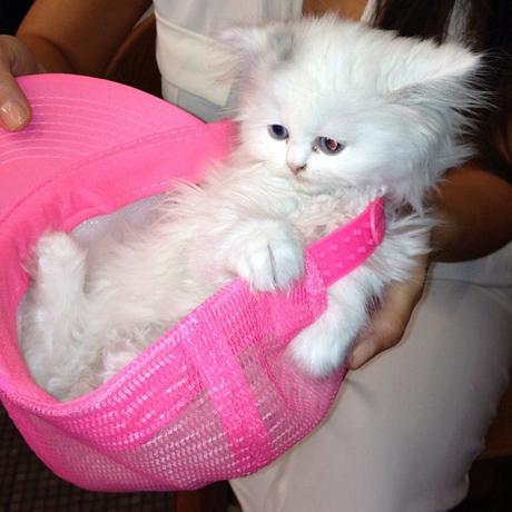 kitten-kardashian-460.jpg