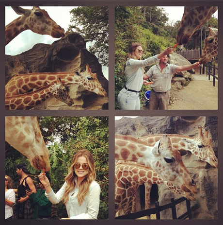 khloe_kardashian_giraffe_112213.jpg