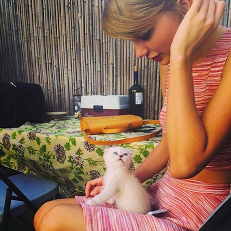 taylor-swift-new-cat.jpg