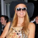 Paris Hilton Jets Off To Art Basel After Stalker Threatens To Kill Her